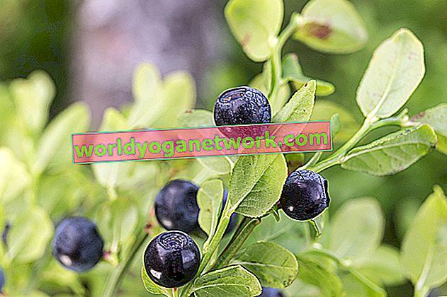 I migliori integratori di frutta mirtillo