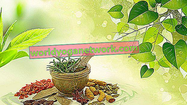 Ayurveda 101: il miglior pranayama per il tuo Dosha