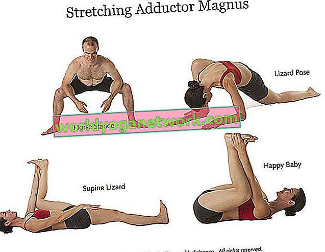 Yoga Anatomy 101: Besoin de savoir sur les adducteurs de la hanche