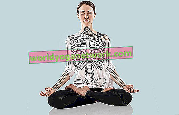 Anatomía para el yoga con Paul Grilley.