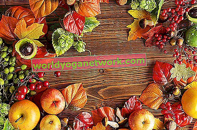 Alimentos a tierra para el otoño