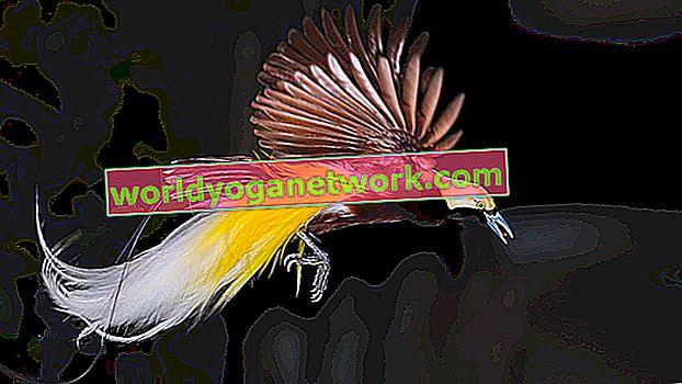 4 přípravné pózy pro Bird of Paradise