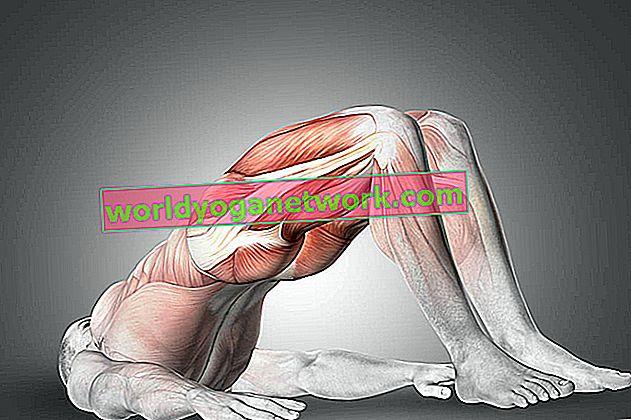 Anatomija 101: Upoznajte svoje glute mišiće