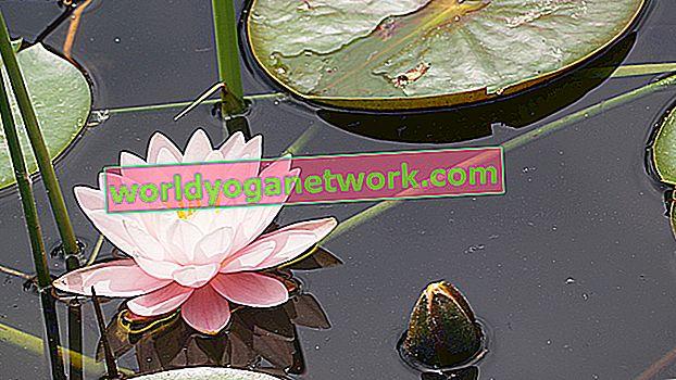 Obydlí v lotosovém srdci: Meditační praxe